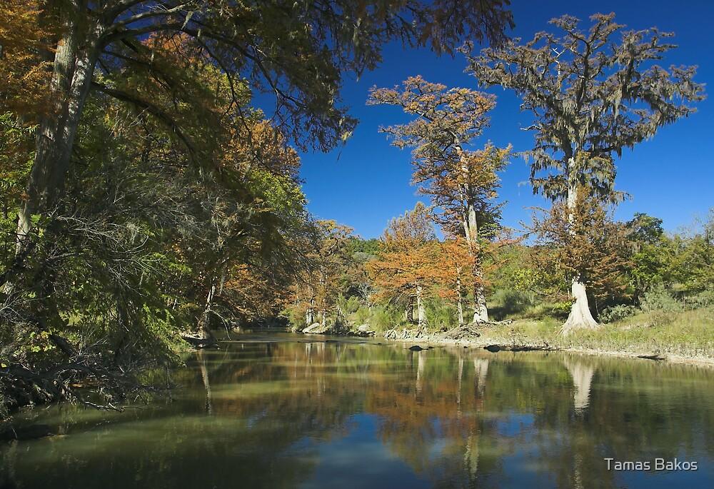 Texas November by Tamas Bakos