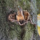 Squirrels by Keala