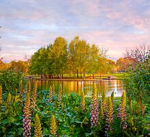 East Parklands - Adelaide, South Australia by Mark Richards