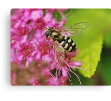 Hoverfly . 5 Canvas Print