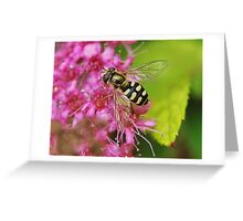 Hoverfly . 5 Greeting Card