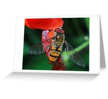 Hoverfly Macro Greeting Card