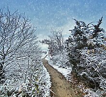Cape Cod : First Snowfall on the Path by Christopher Seufert