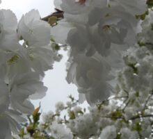 Tree Flowers in Bloom Sticker
