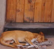 Dog at Rest Sticker
