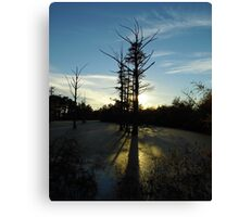 Backlit Cypress Canvas Print