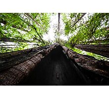 Redwood Cave with Trees Photographic Print