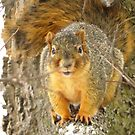 Just Another Squirrel by lorilee