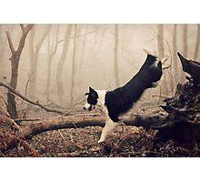 Wild Wood Photographic Print