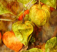 Chinese Lanterns Plant - Physalis alkekengi by MotherNature2
