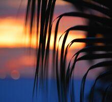 Algarve Sunrise by wraysburyade