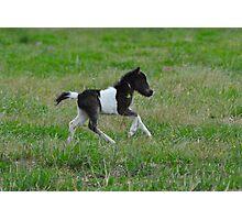 Piebald Shetland Foal Photographic Print