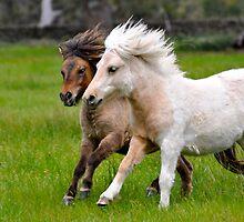 Pair of Ponies Running by fenwickstud