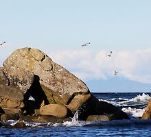 Oyster Bay Rocks and Sea by TerrillWelch