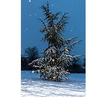 Fir Tree and snow Photographic Print