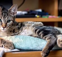 Lazin' on the Desktop by Mikell Herrick