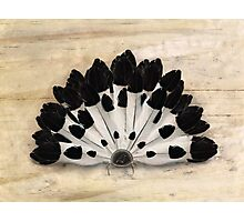 Yin Yang Magpie Feather Fan Photographic Print