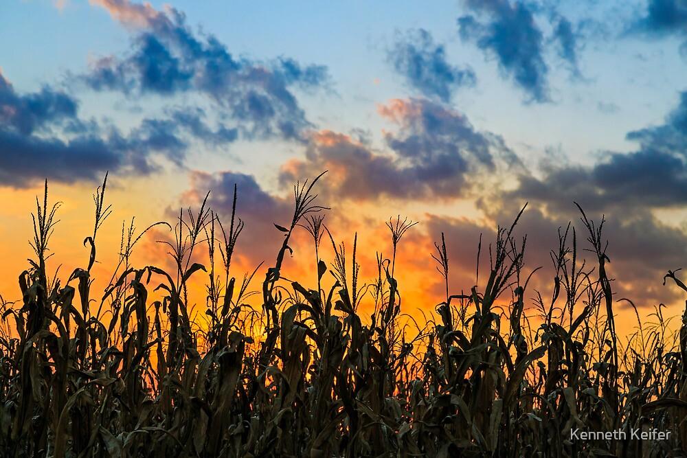 Sundown Cornfield by Kenneth Keifer