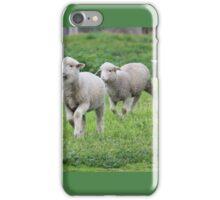 Playful pet lambs iPhone Case/Skin