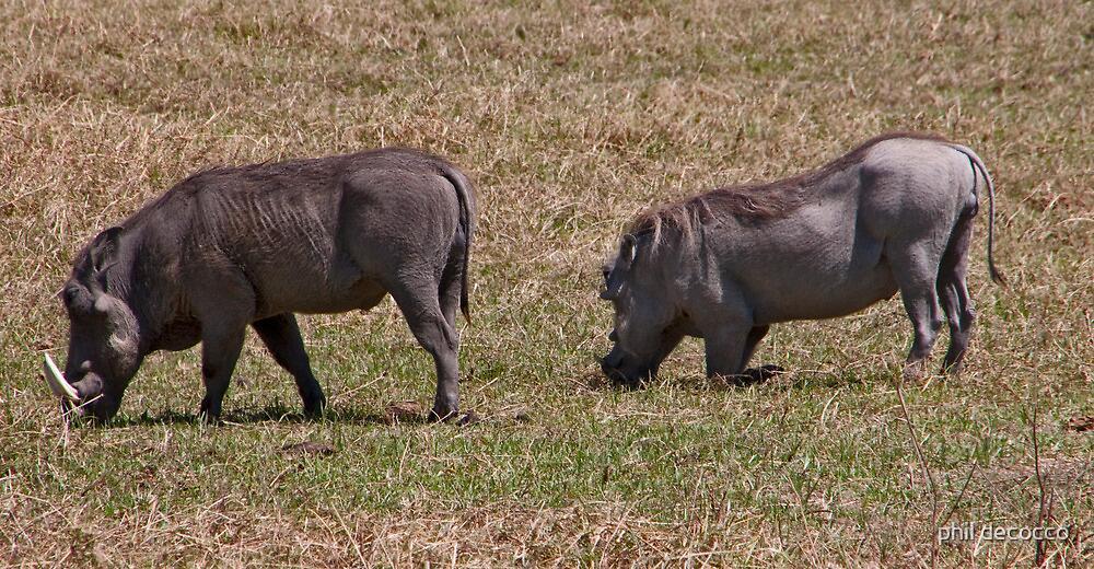 Feeding Warthogs by phil decocco