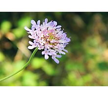 Little flower Photographic Print