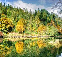 Autumn on the Tolt River by Dana Horne