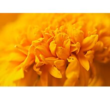 Yellow Photographic Print