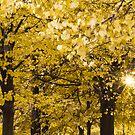 Autumn in Paris at Jardin des Tuileries by Olivier Sohn