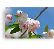 Spring Blossom 10 Canvas Print
