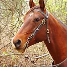 Trail Horse by lorilee