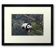 If I Close My Eyes Will I Fall Out Of This Tree? Framed Print
