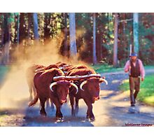 The Bullock Team Photographic Print
