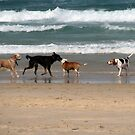 the dogs of Tallows by Zefira