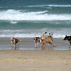 dog beach 6 by Zefira