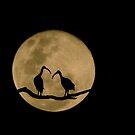 Good Night 2 by kvlionphotos
