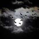 Good Night 3 by kvlionphotos