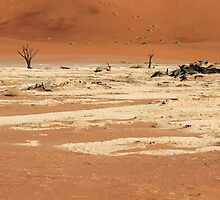 Deadvlei by JenniferEllen