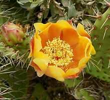 Beauty among the Thorns by mussermd