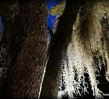 Spanish Moss by Debbie Robbins
