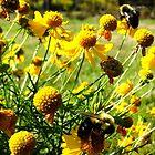 Beautiful Bees by Debbie Robbins
