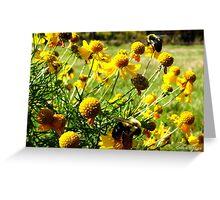Beautiful Bees Greeting Card