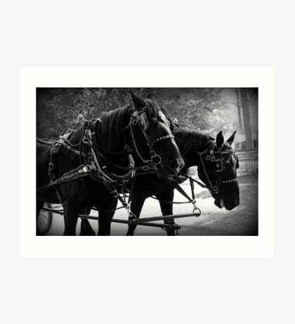 Black Percheron Draft Horse Team Art Print