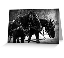 Black Percheron Draft Horse Team Greeting Card
