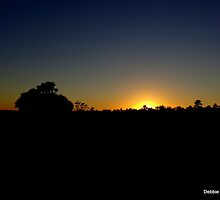 Sunset in North Florida by Debbie Robbins