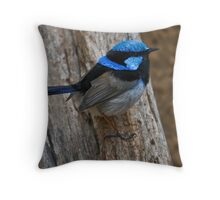 Superb Fairywren Throw Pillow