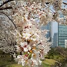 cherry blossoms in Tokyo by Martin Pot