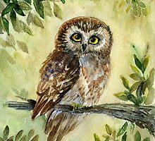 Saw Whet Owl by Redilion