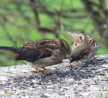 Sparrows share a secret by missmoneypenny