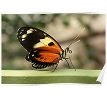Orange Yellow and Black Butterfly Poster