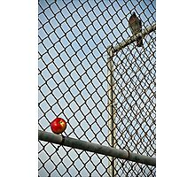 On the Other Side of the Fence Photographic Print